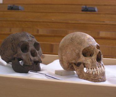 Sejarah Homo Floresiensis di Pulau Flores-Indonesia